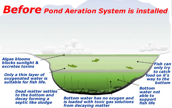Why aerate my pond for Koi pond aerator