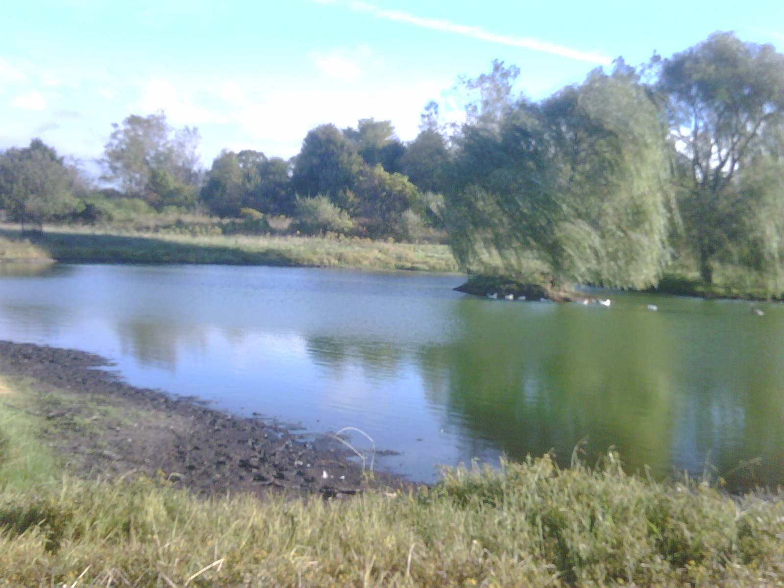 C  Users Scott Pictures ponds a ponds 2010 lapeer duck pond lapeer duck pond in (2)