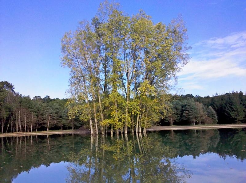 C  Users Scott Pictures ponds a ponds 2011 ann arbor mikee pond 2 Ann Arbor Mikee pond 2  (10)