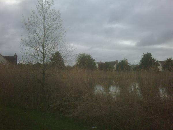 Bruce twp N CLEan (HOA pond maintenance) (2) resized 600