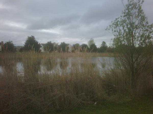 Bruce twp N CLEan (HOA pond maintenance) (4) resized 600
