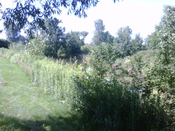 saline N retention pond maintenance (5) resized 600