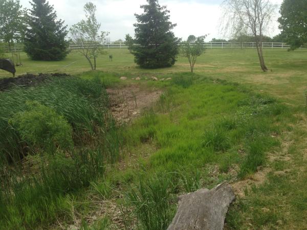Ann Arbor Pond repair (N) (15) resized 600