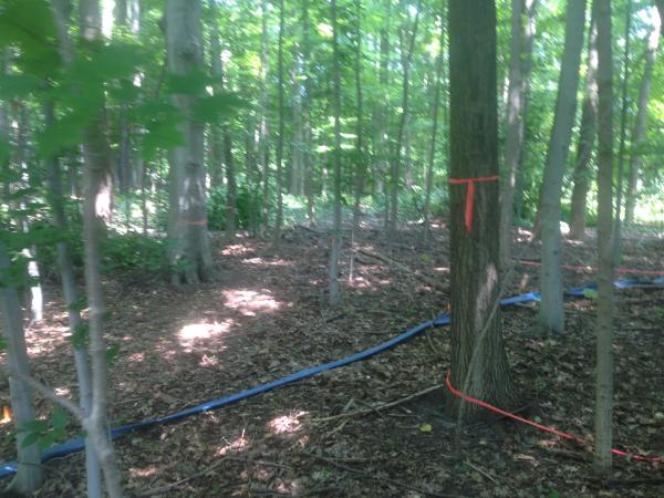 (N) Canton, Michigan backyard pond install (62) resized 600