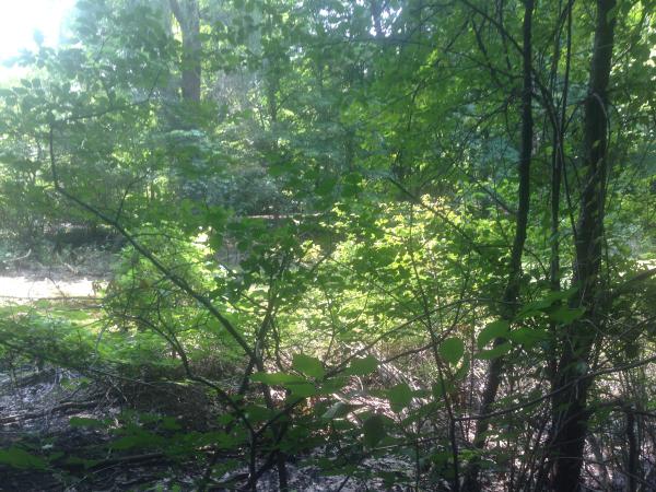 (N) Canton, Michigan backyard pond install (60) resized 600