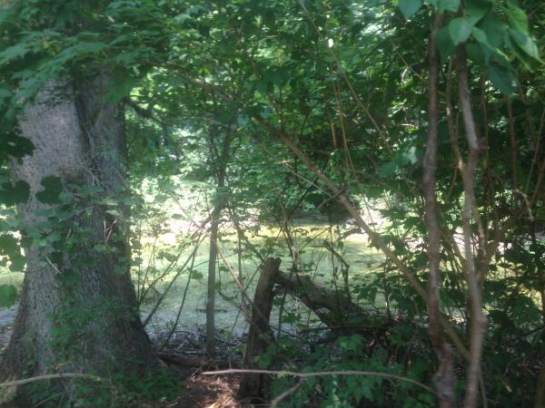 (N) Canton, Michigan backyard pond install (75) resized 600