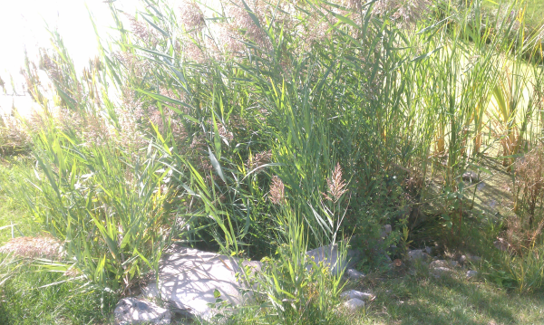Dexter (Michigan pond management) (3) resized 600
