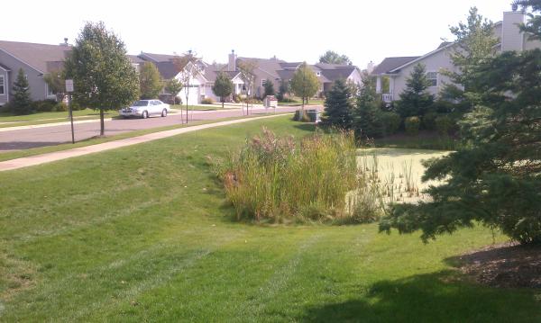 Dexter (Michigan pond management) (6) resized 600