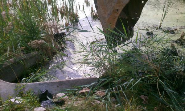 Dexter (Michigan pond management) (17) resized 600