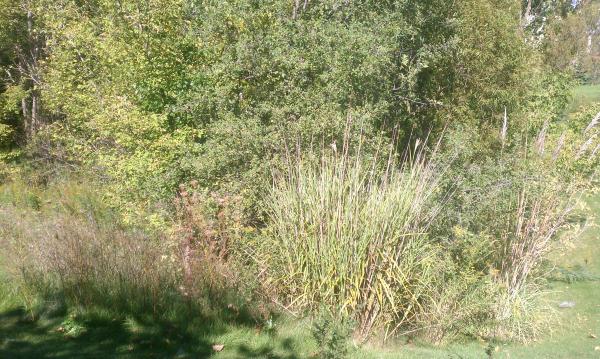 ( 2013 N Barton Hills) Michigan pond repair Dexter (8) resized 600