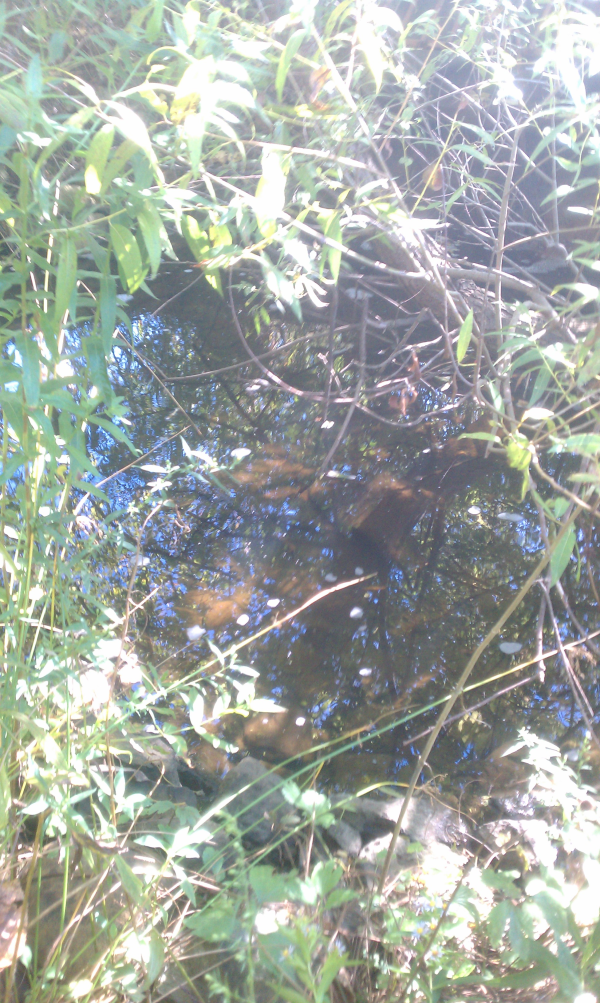 ( 2013 N Barton Hills) Michigan pond repair Dexter (7) resized 600