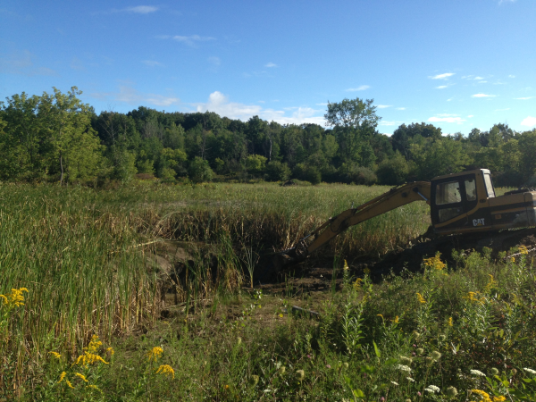 Clio, Michigan N Cattail removal Michigan Genesee County resized 600