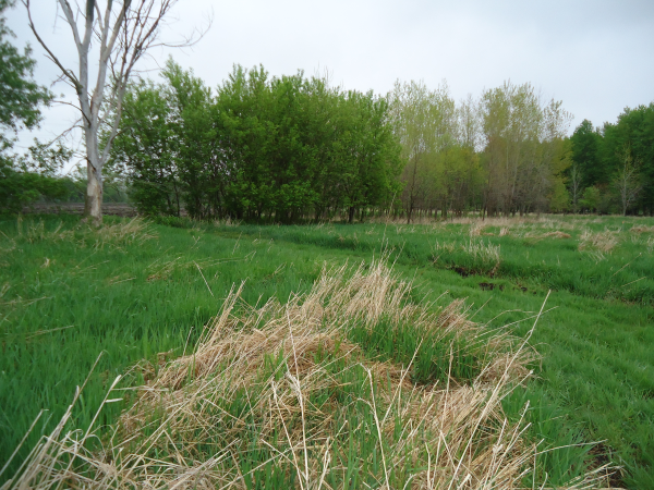 Potterville. Michigan N Michgan pond builder pond construction new pond Lansing (3) resized 600