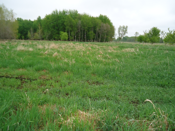 Potterville. Michigan N Michgan pond builder pond construction new pond Lansing (2) resized 600