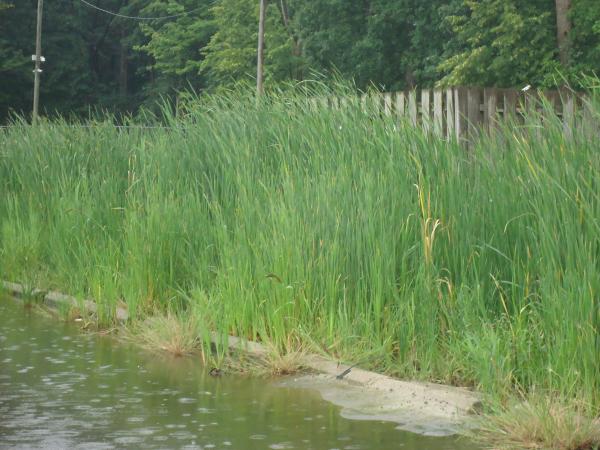 Southfield, Michigan Ditch restoration Michigan  Lear Group Ditch (17) resized 600