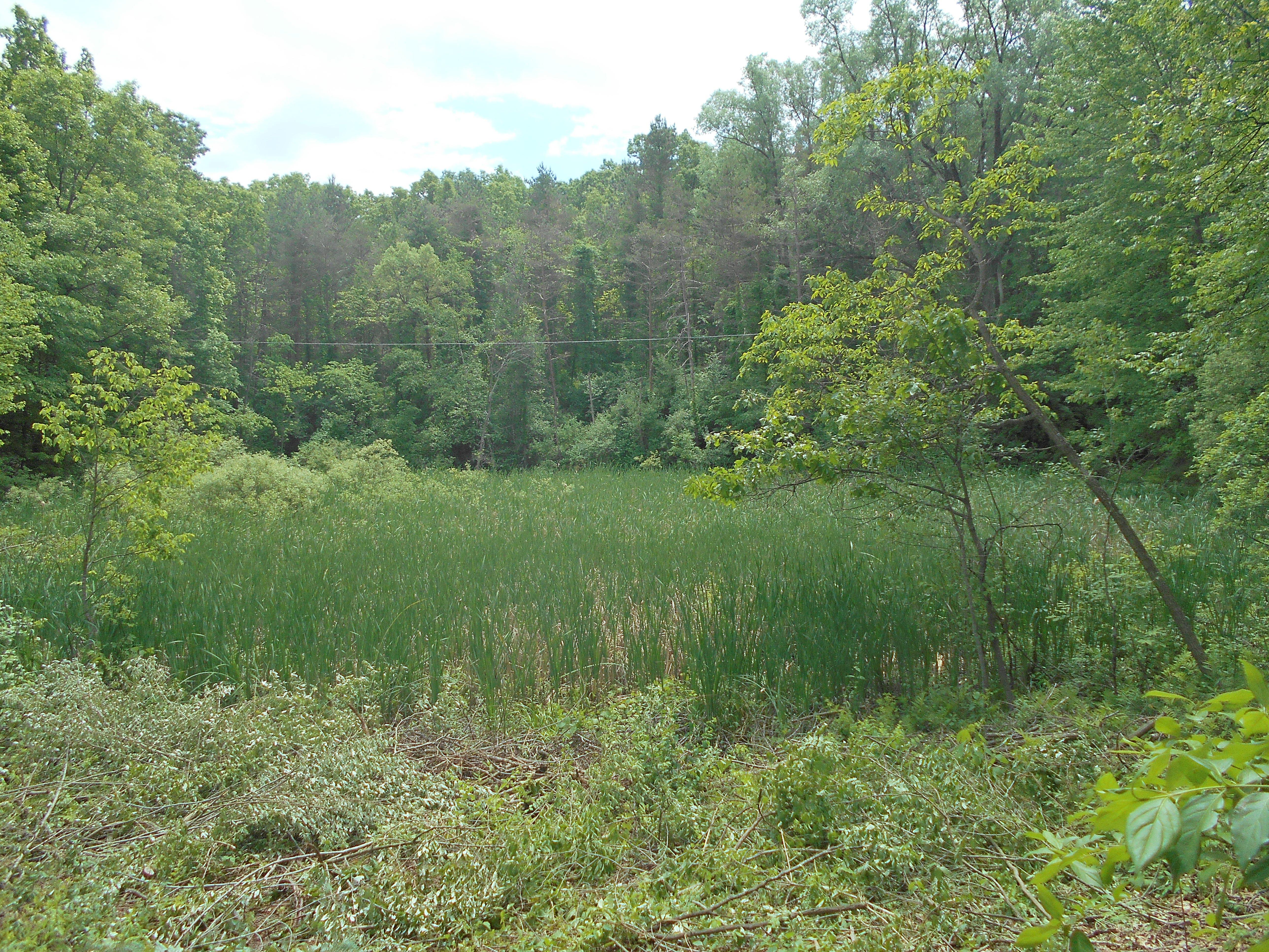 Ada, MI clean out swamp new pond (12) (N)