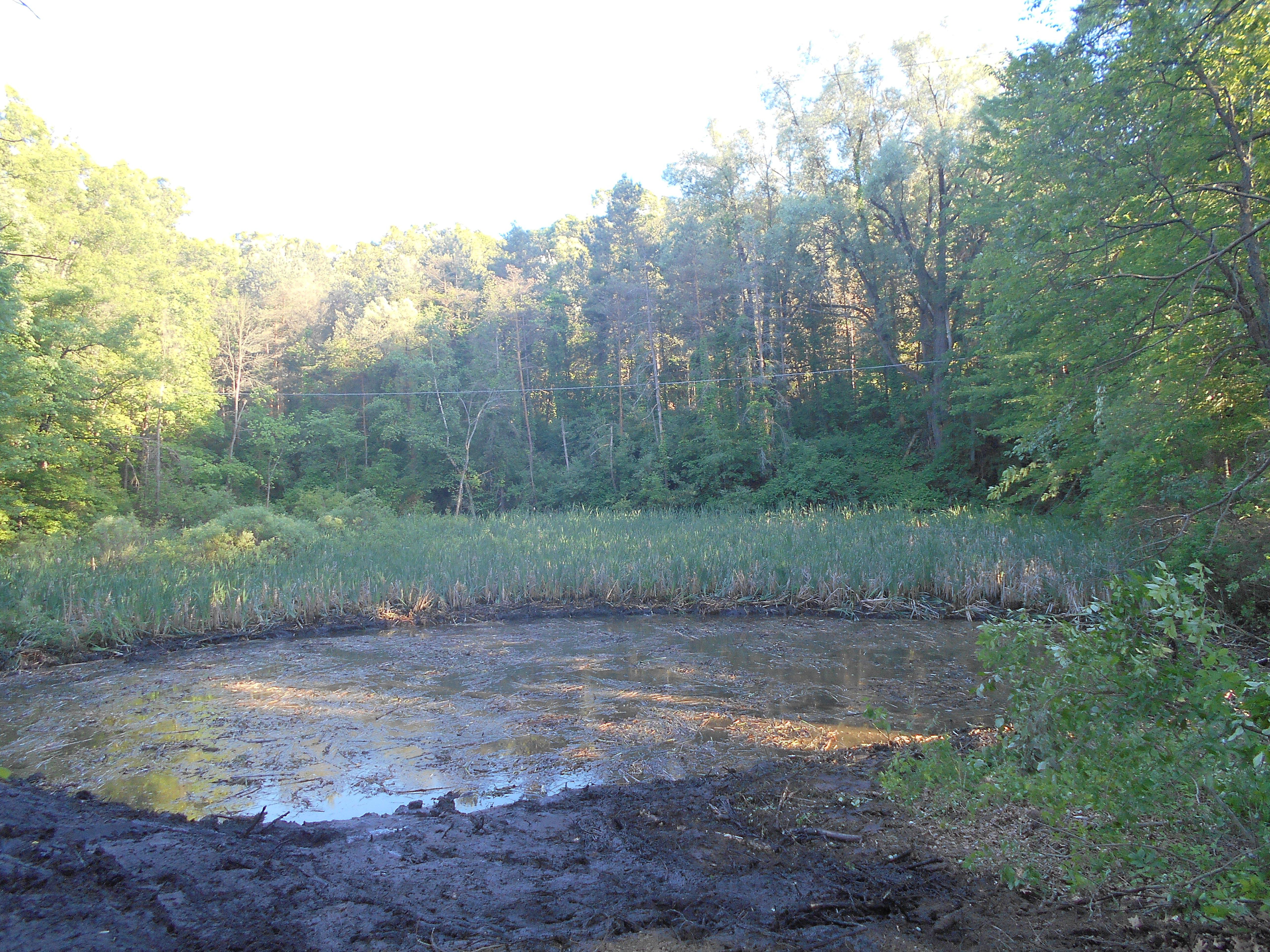 Ada, MI clean out swamp new pond (22) (N)