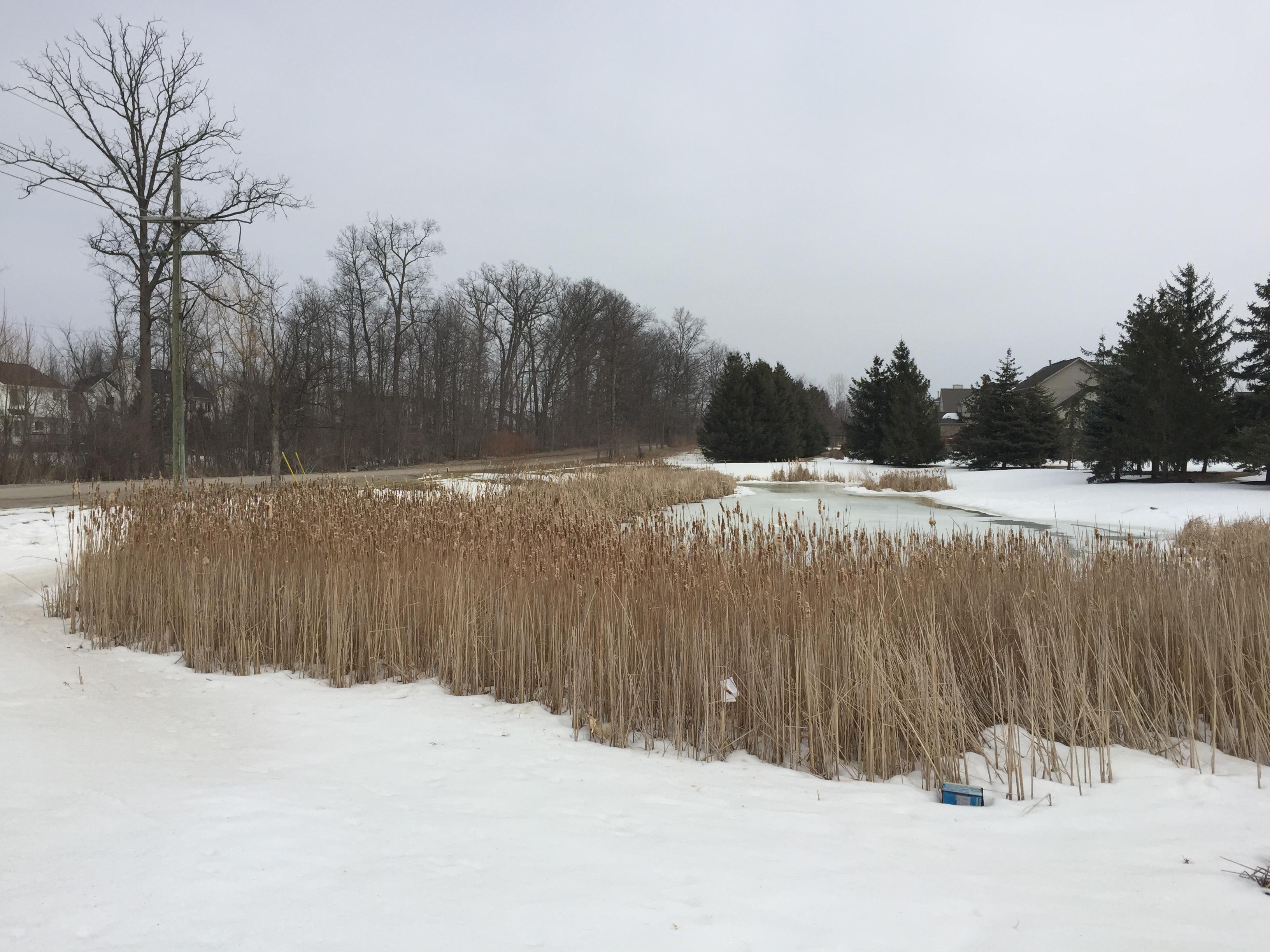 Ann Arbor, Mi Hoa clean out (2).jpg