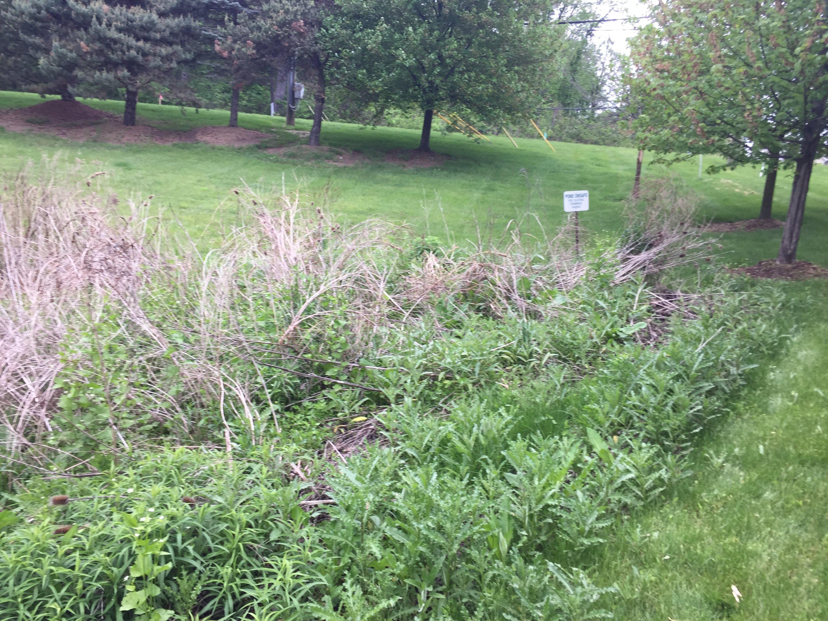 Ann Arbor, Michigan retention basin pond fix (110).jpg