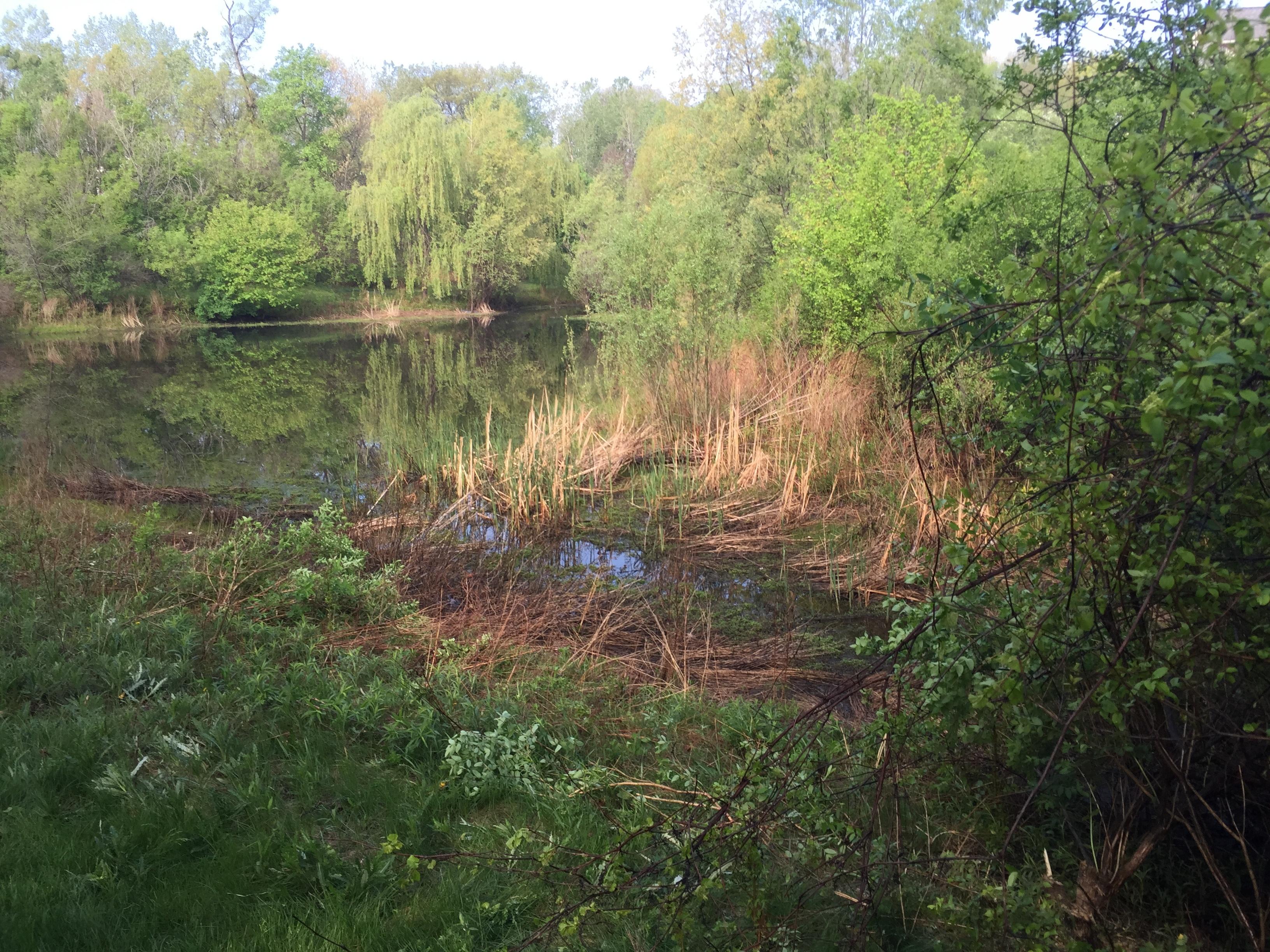 Ann Arbor, Michigan retention basin pond fix (84).jpg