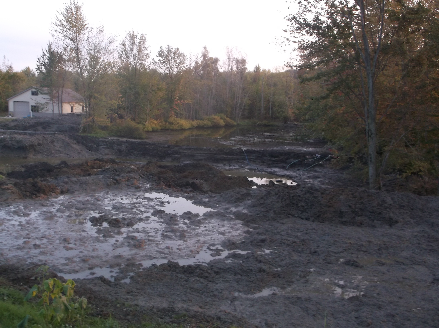 Grand Blanc, Michigan New swamp pond Michigan (127)