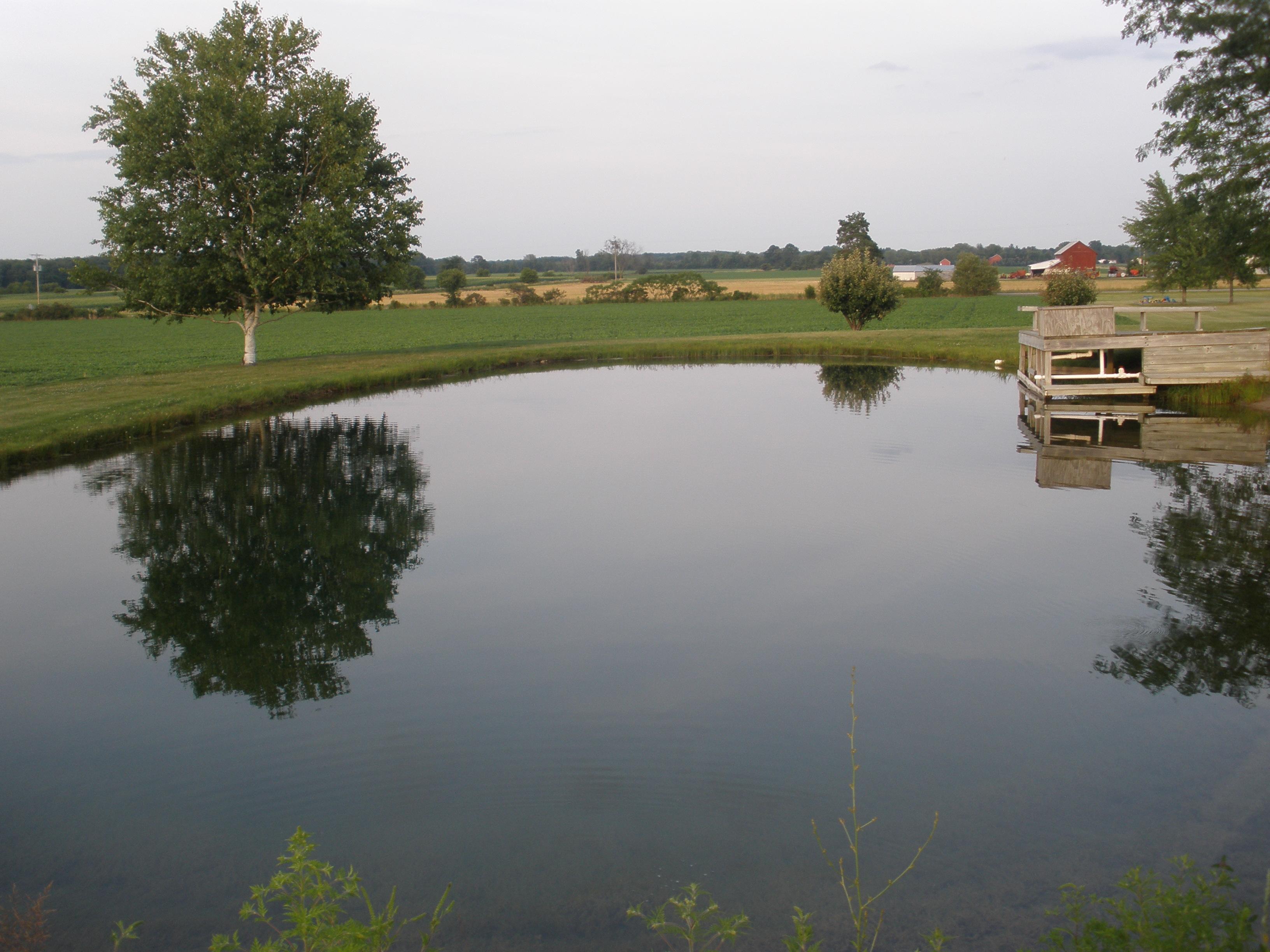 ponds 104.jpg