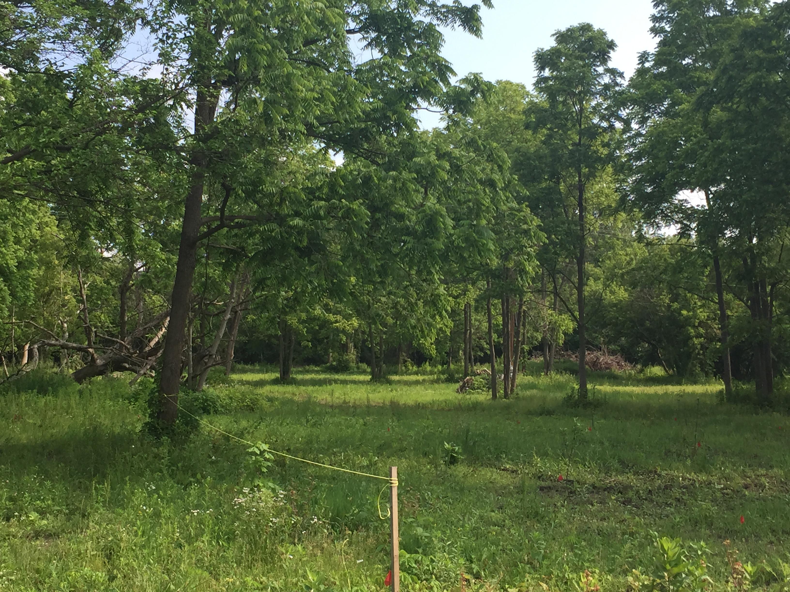 Brownstown, New pond dig (1).jpg