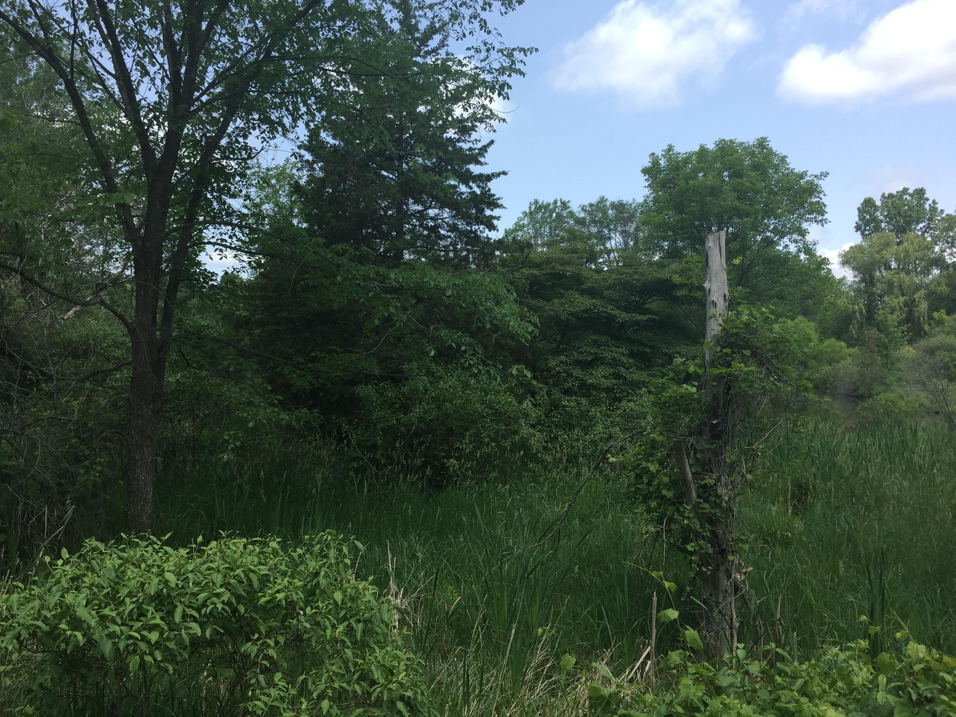 Brownstown, New pond dig (3).jpg
