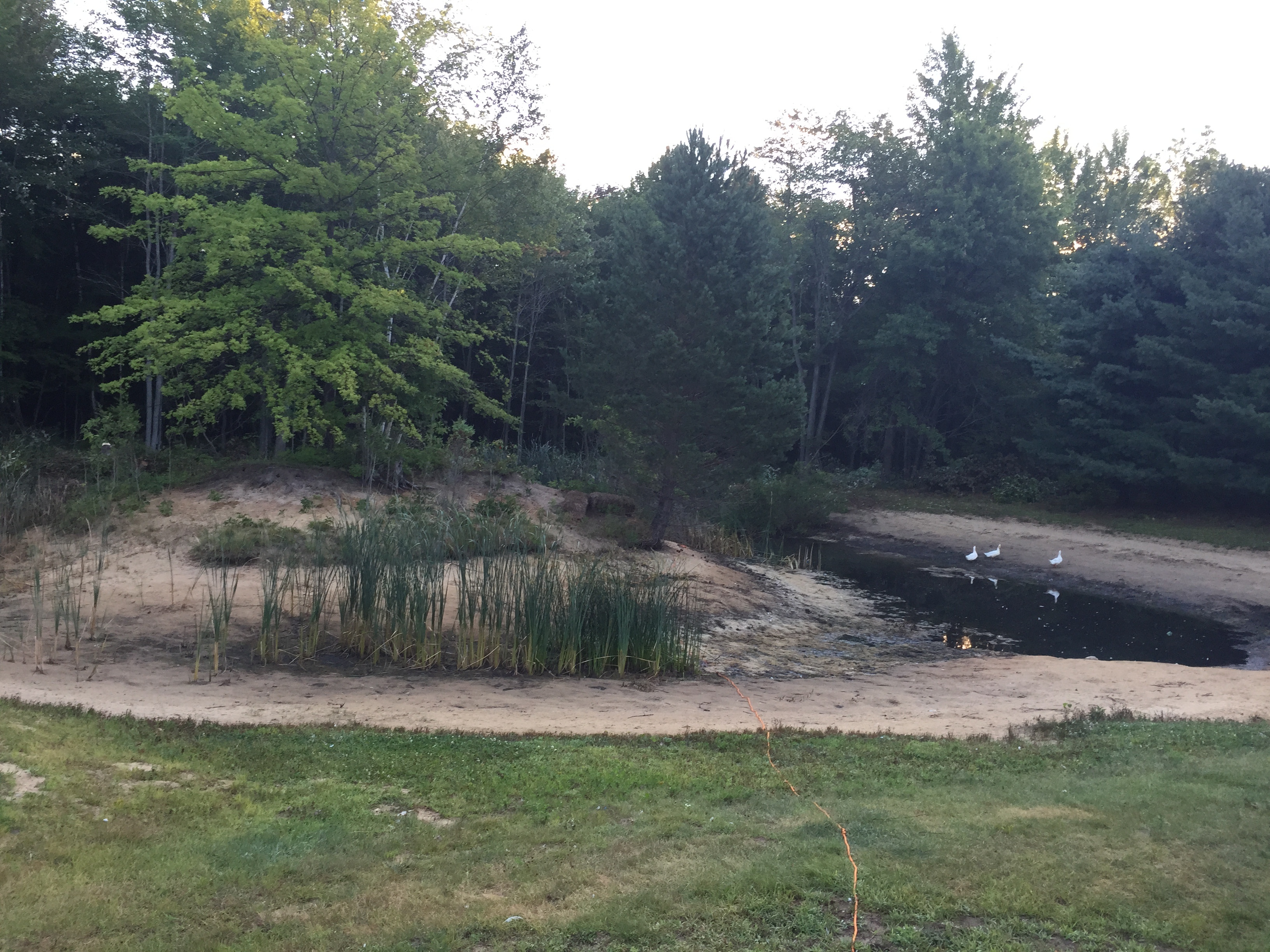 Chesaning, MI Pond clean-out (22).jpg