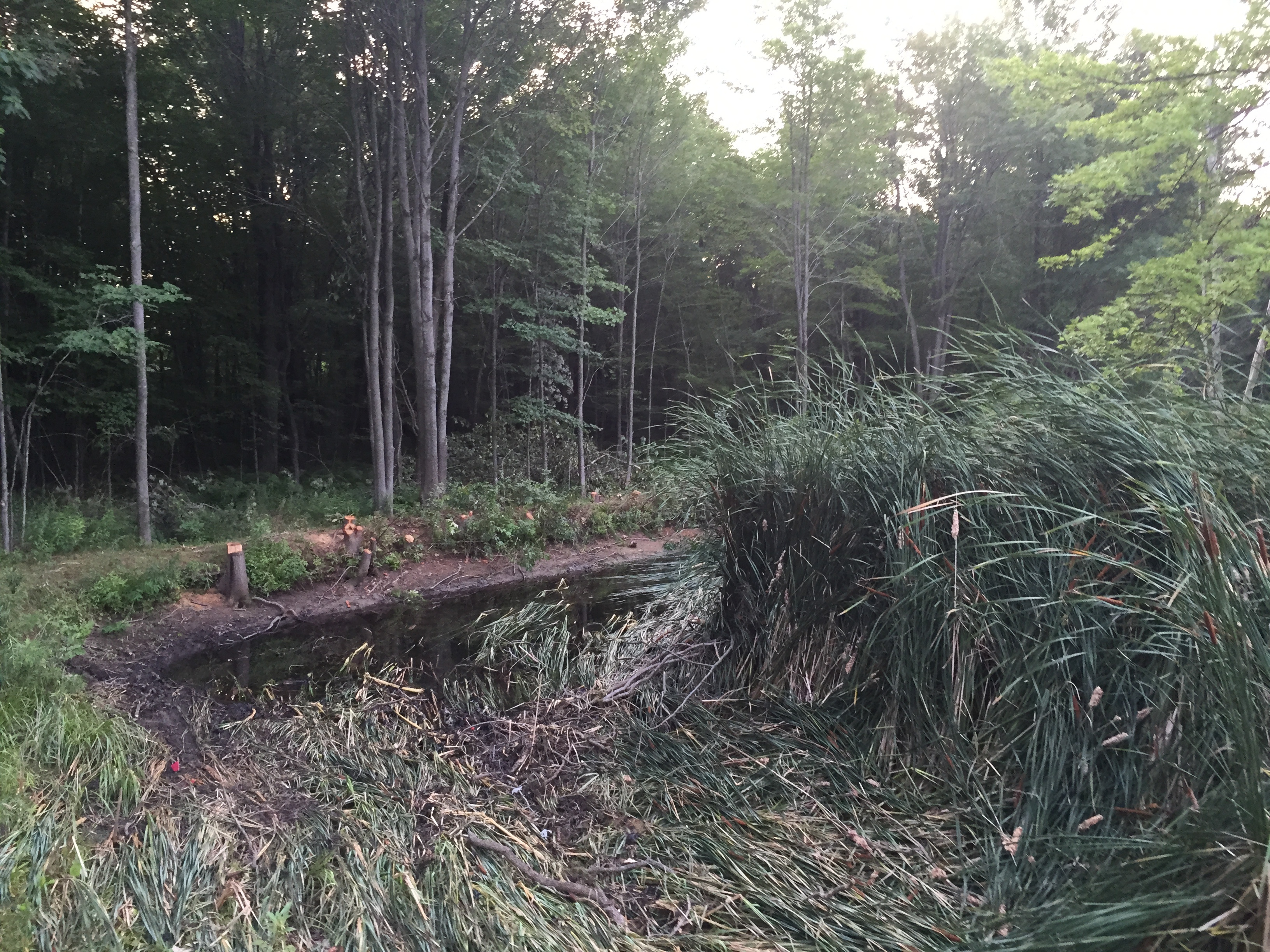 Chesaning, MI Pond clean-out (3).jpg
