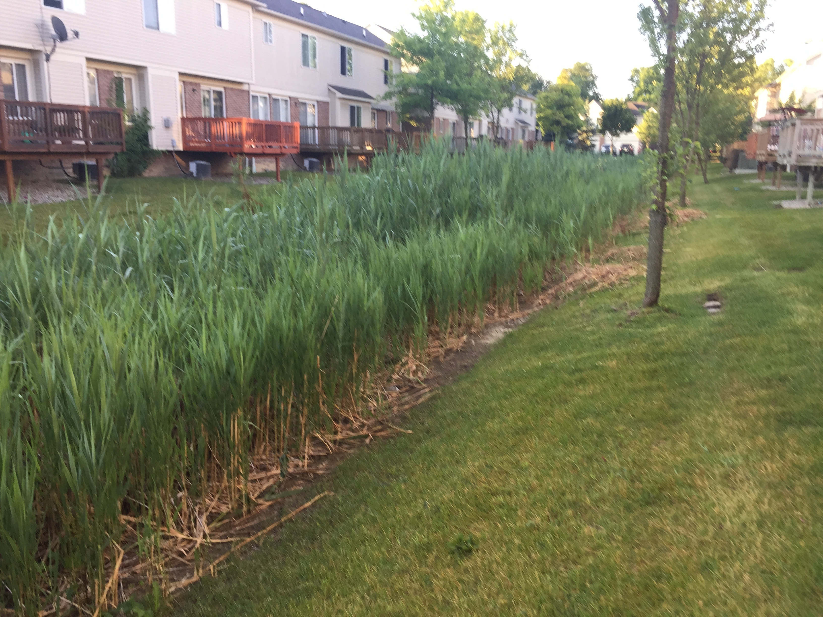 Dearborn, Michigan ditch maintenance (54).jpg