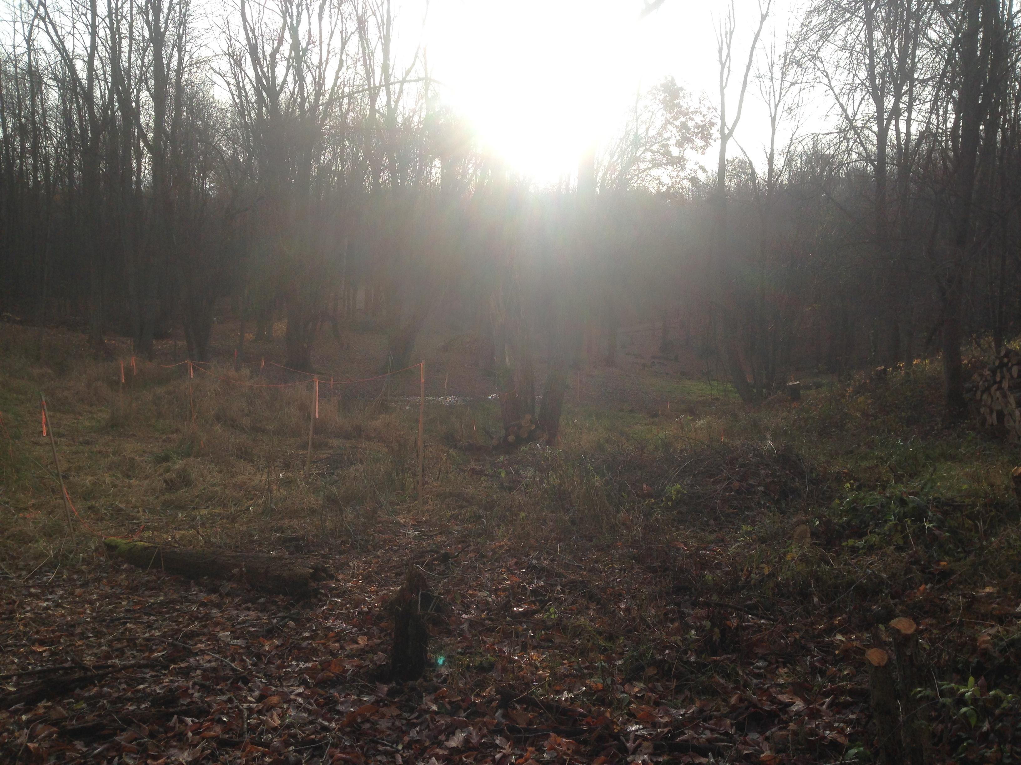 Oxford_Michigan_back_yard_pond_68.jpg