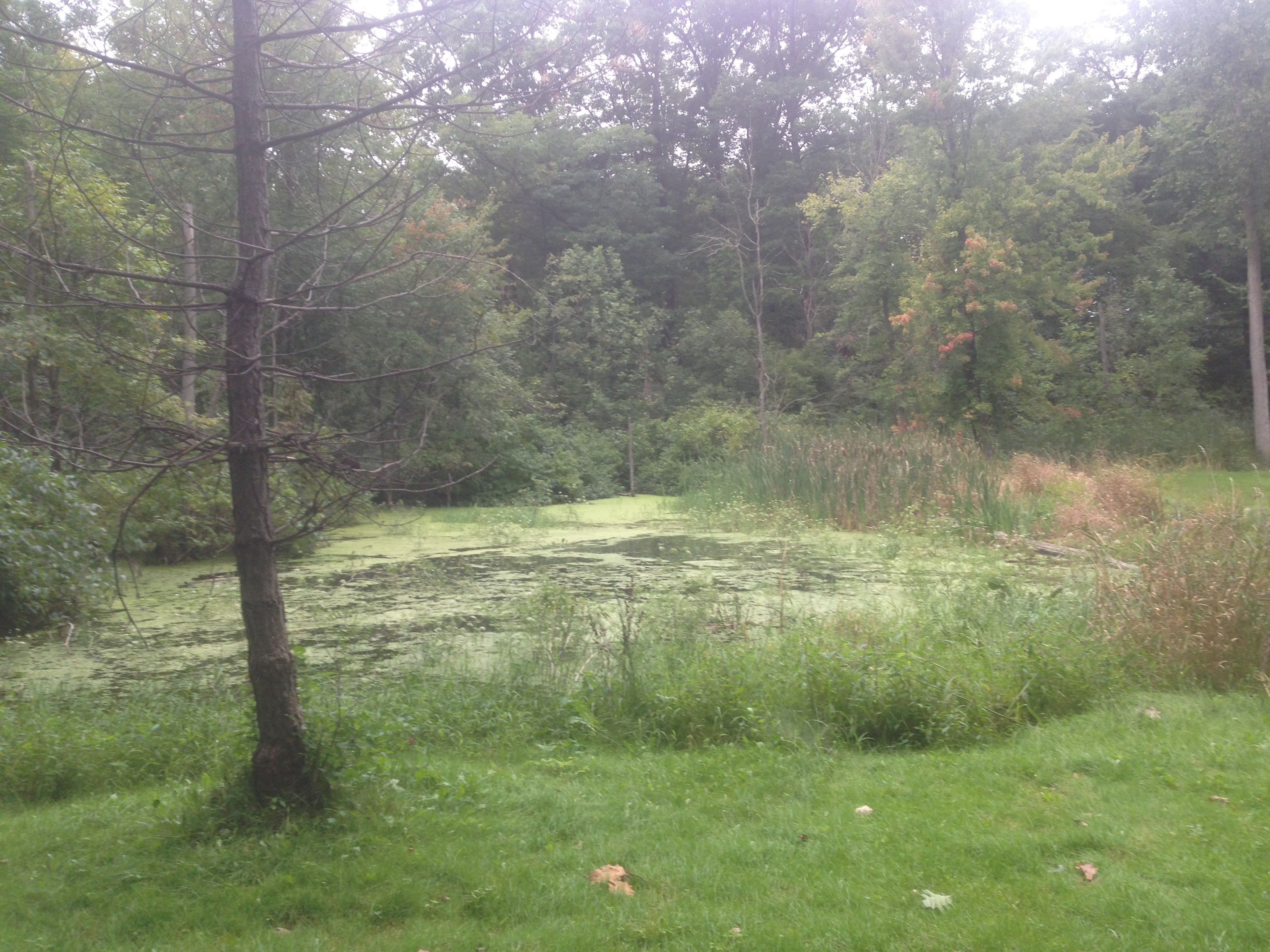 Pond_restoration_Novi_Michigan__36.jpg