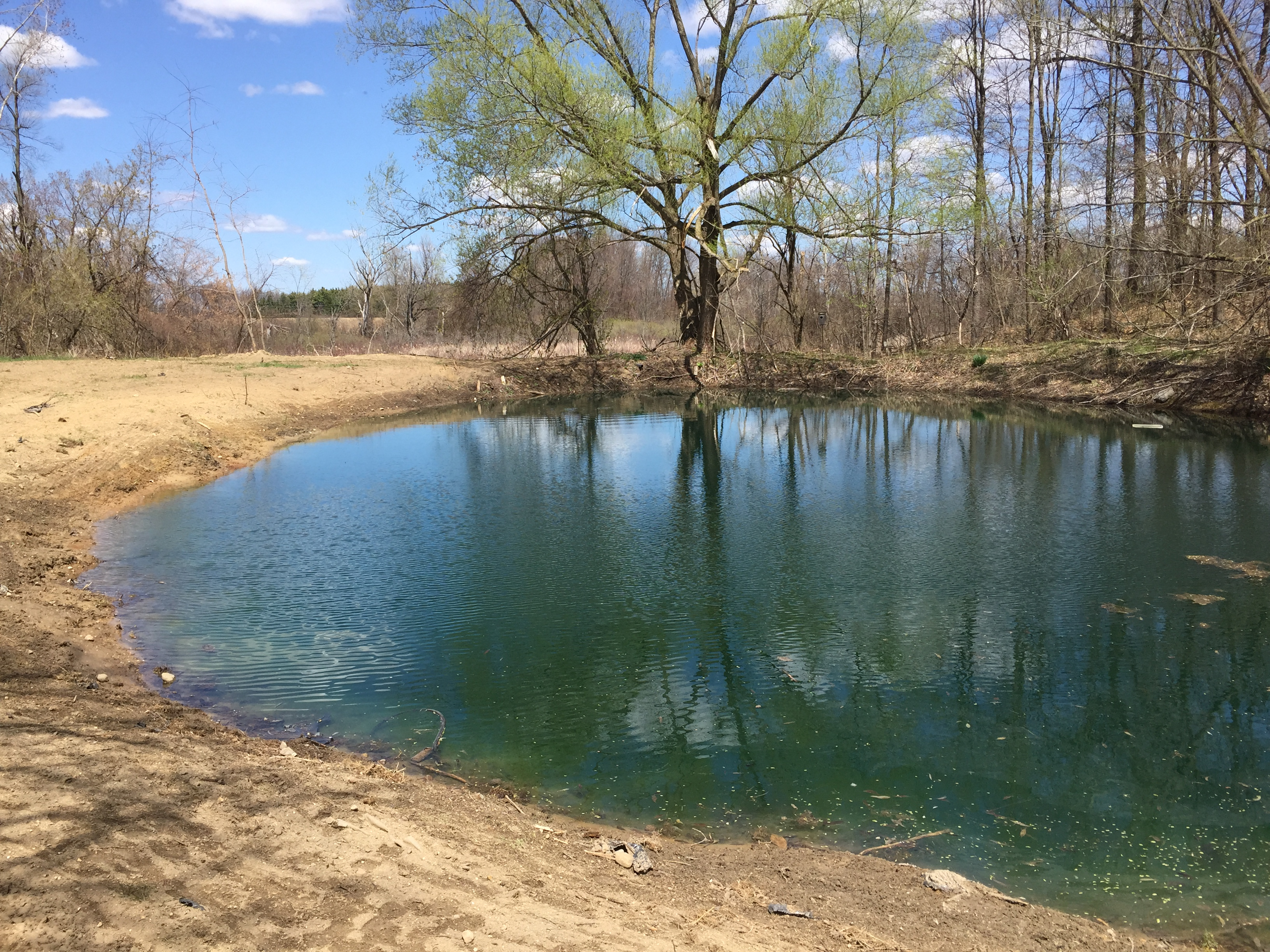 Pond_silted_in_dug_out_Metamora_Michigan_20.jpg