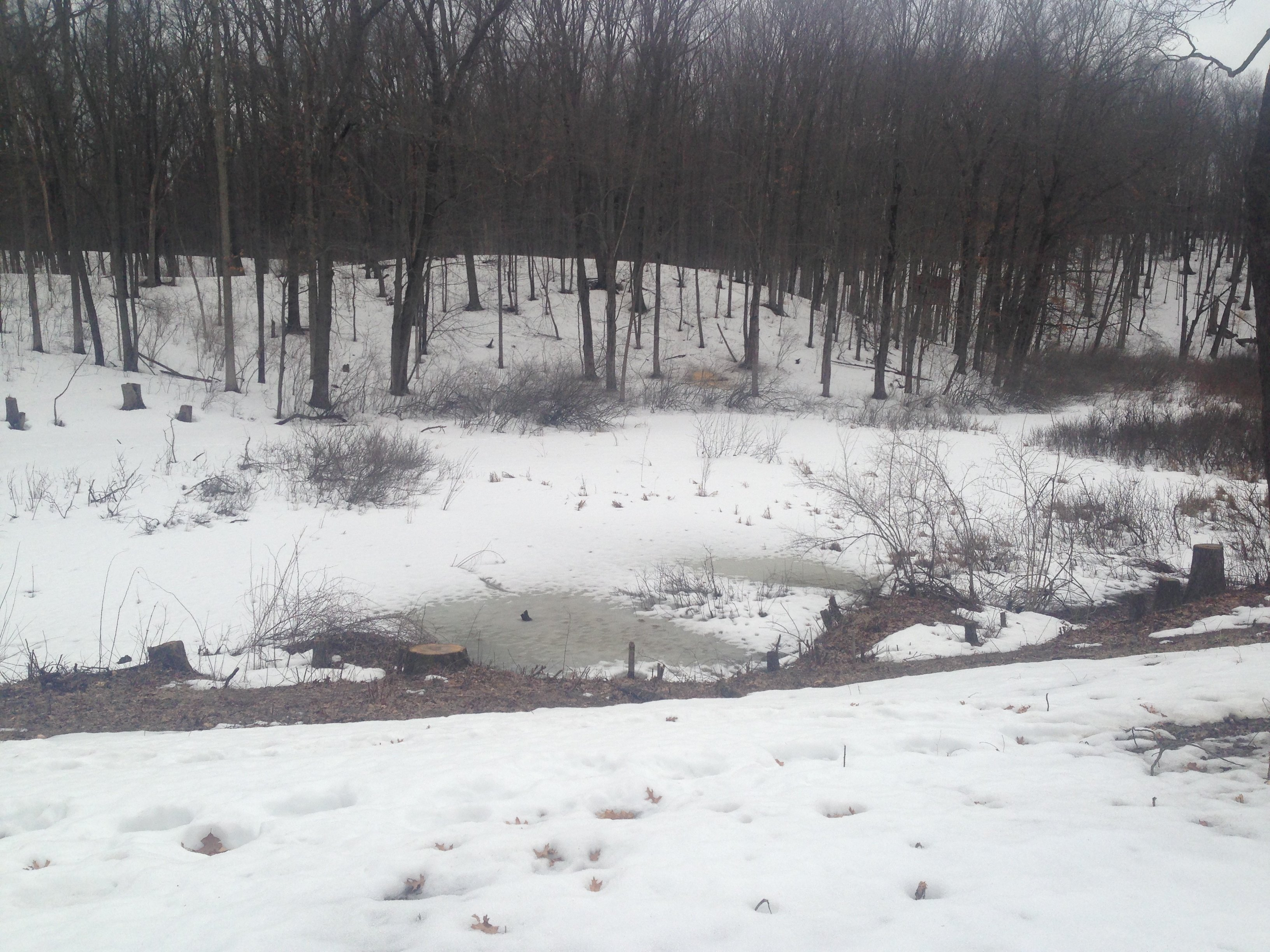 Wetland_pond_construction_Pinckney_Michigan_2.jpg