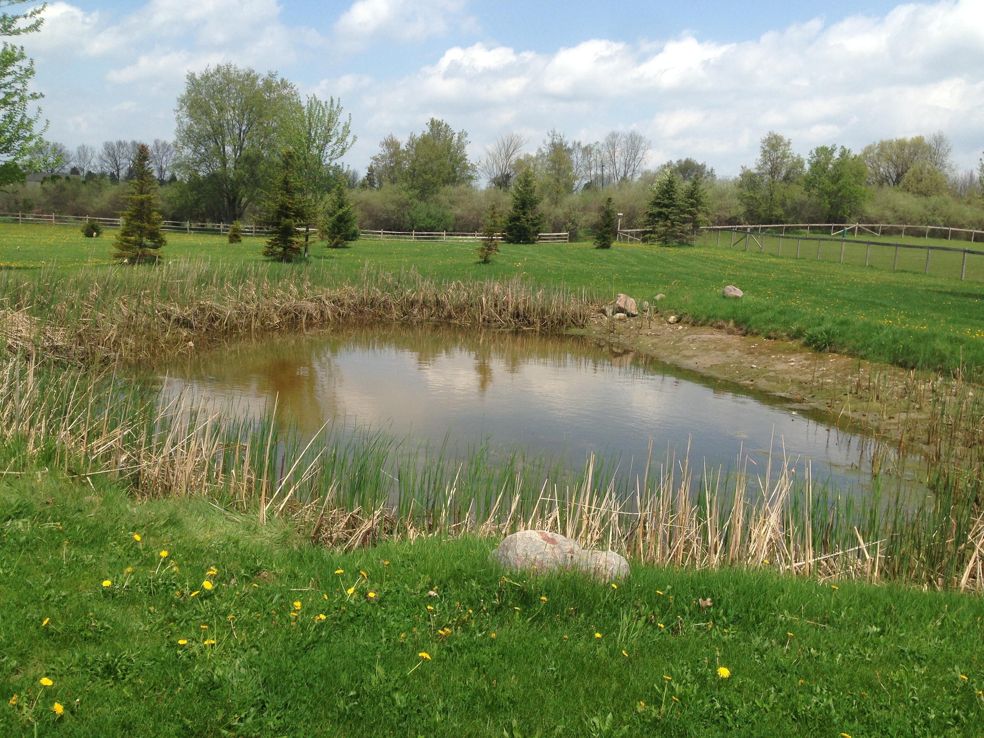 _Backyard_pond_bank_stabilization_Michigan_Howell.jpg